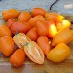 Seminte de rosii soiul Andine Cornue Orange
