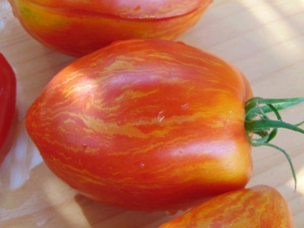 Seminte de rosii soiul Striped roman