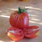 Seminte de rosii Fragola Garfagnana