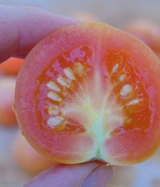 Seminte de rosii Gialleto Brindisino