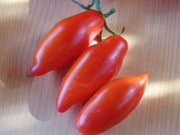 Seminte de rosii soiul Tegucigalpa