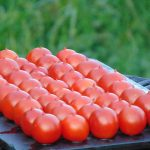 Seminte de rosii Piennolo del Vesuvio