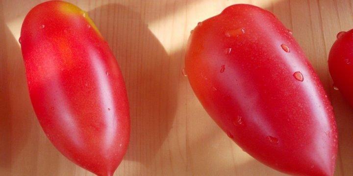 Seminte de rosii soiul Rosii Kapia