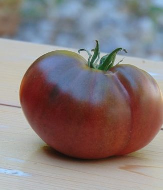 Seminte de rosii Giant Fiolet