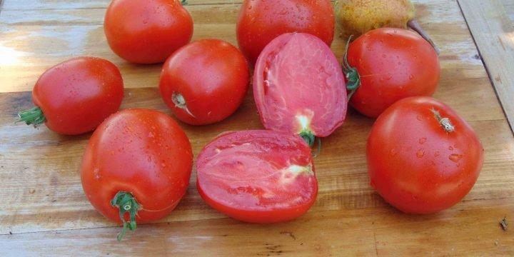 Seminte de rosii Prunisoarele lui Lucian