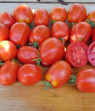 Seminte de rosii soiul Pera d'Abruzzo