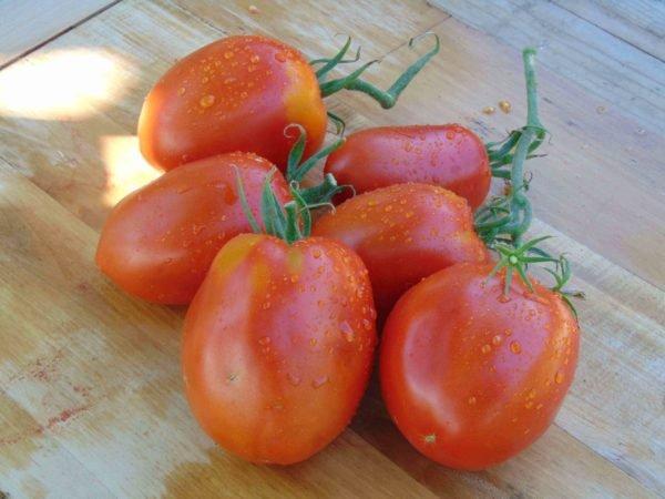 Seminte de rosii soiul Pero Gigante, soi de rosii pentru cultivare