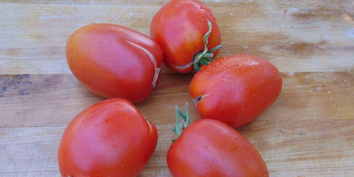 seminte de rosii soiul Prue