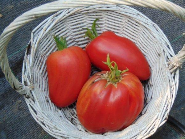 seminte de rosii soiul Work Release Pasta