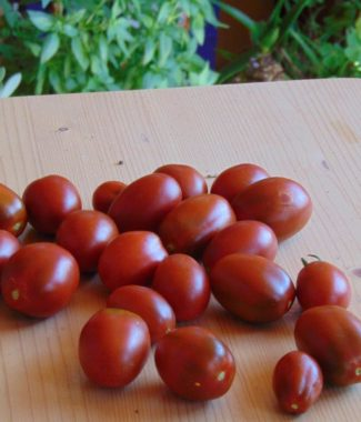 Seminte de rosii soiul Black Plum