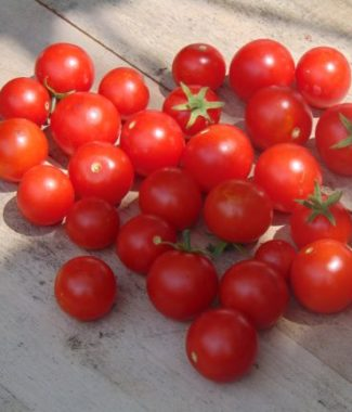 Tomate Hundreds and Thousands